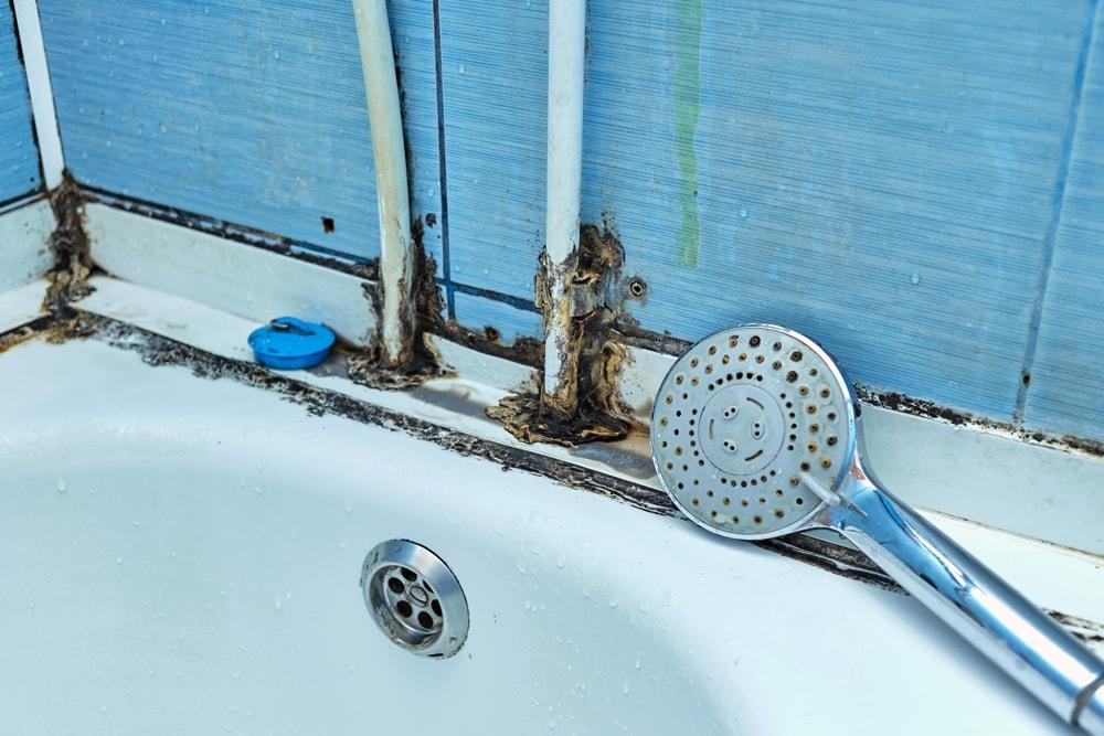 Shower Mould
